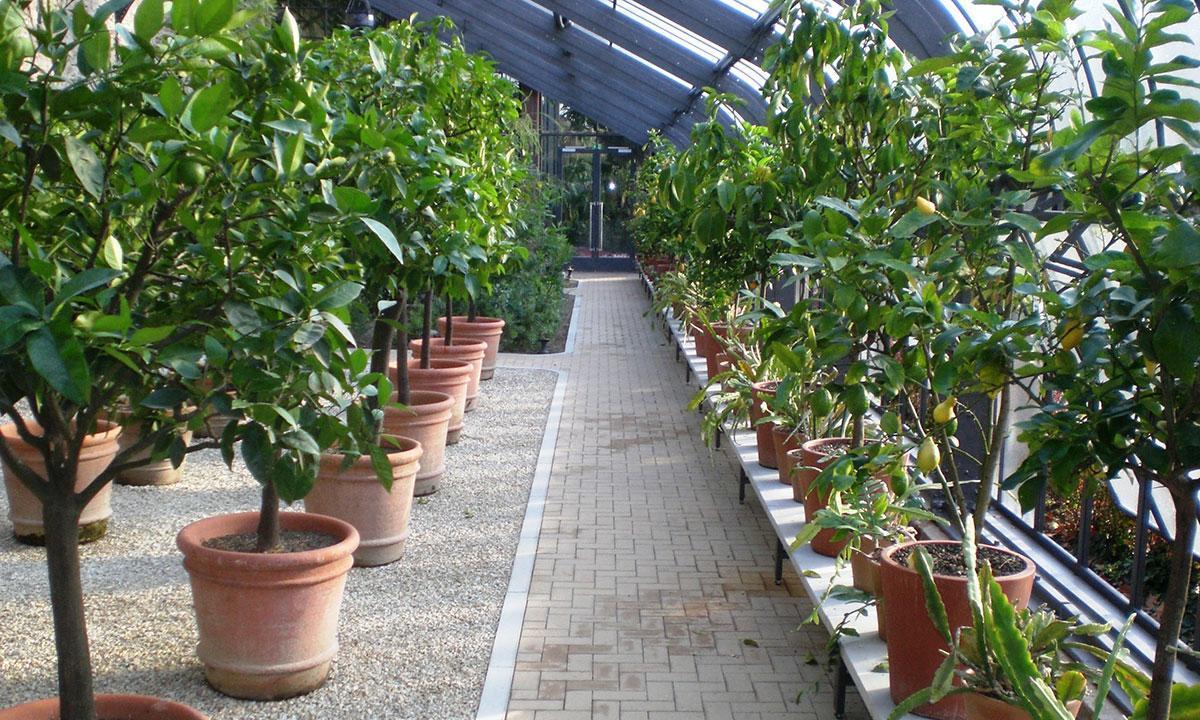 Kübelpflanzen im Glashaus des Botanischen Gartens Karlsruhe; Foto: Stefan Helleckes