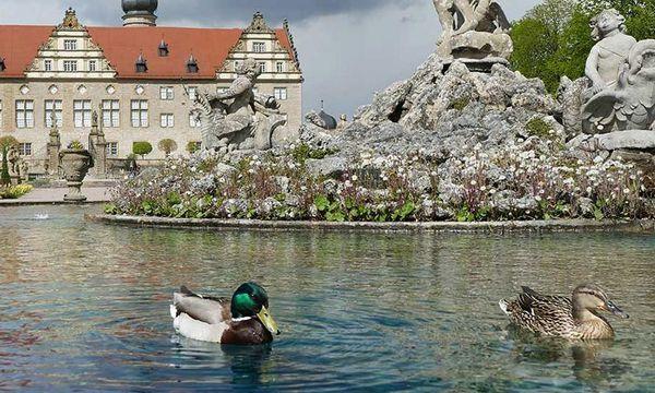 Im Herkulesbrunnen im Garten von Schloss Weikersheim schwimmen die Enten gerne herum; Foto: Staatliche Schlösser und Gärten Baden-Württemberg, Sonja Wünsch