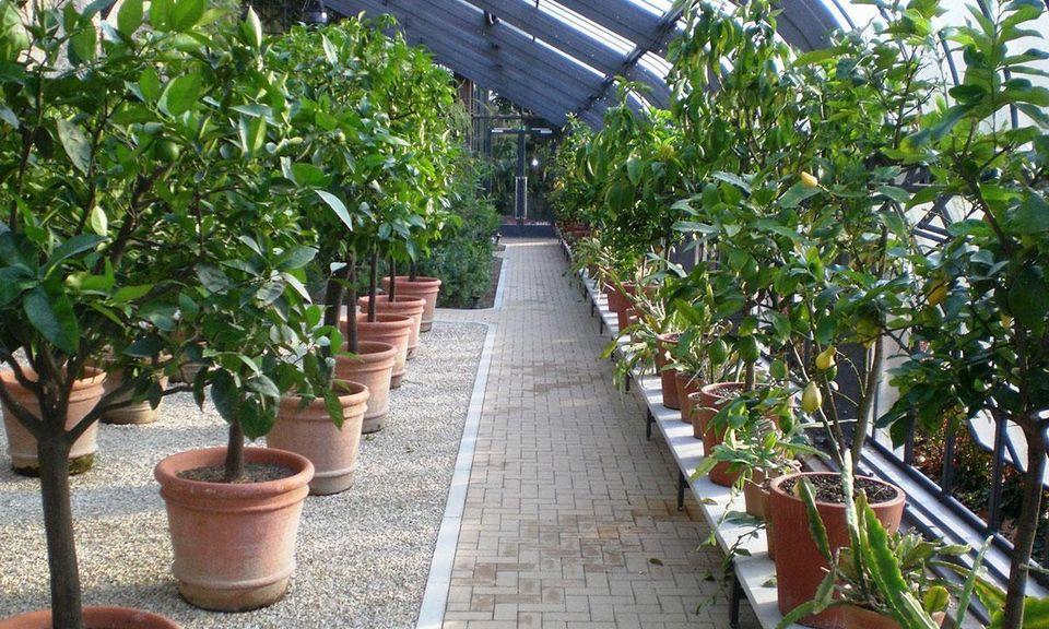 Kübelpflanzen im Glashaus des Botanischen Gartens Karlsruhe